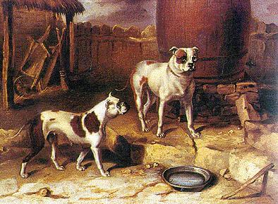Bulldogs about 1850