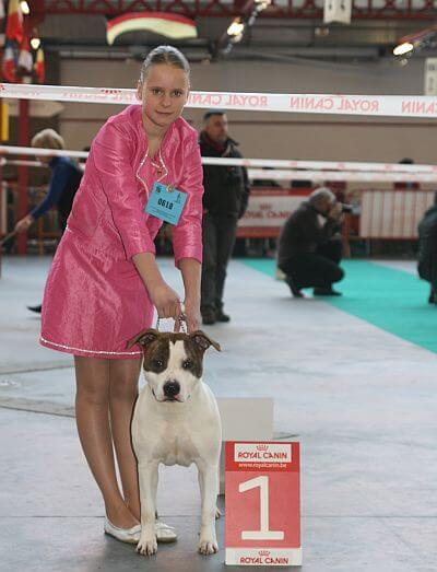Showing a dog to obtain awards